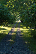 sunlight filters through green trees on dappled country road