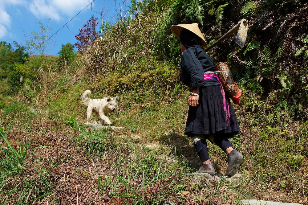 Chine, Province du Guangxi, region de Longsheng,  femme yao à long cheveux // China, Guangxi province, long hair Yao woman around Longsheng
