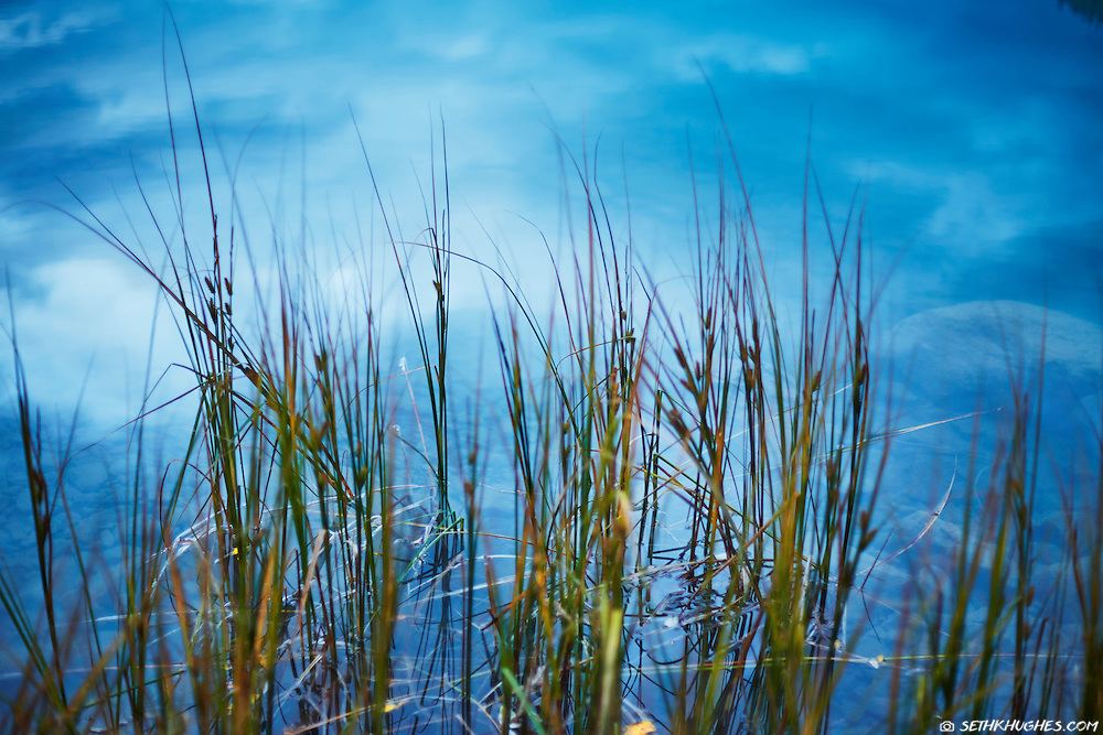 A closeup view of some lakeside grass with the reflection of an approaching storm on the placid water surface.