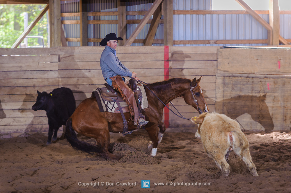 May 20, 2017 - Minshall Farm Cutting 3, held at Minshall Farms, Hillsburgh Ontario. The event was put on by the Ontario Cutting Horse Association. Riding in the Open Class is Troy Donaldson on Xrey owned by Rosalee Munch.