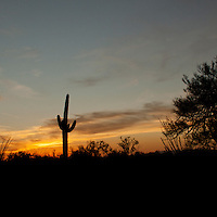 Saguaro National Park, Tucson. Silhouette of Saguaro cactus at sunset