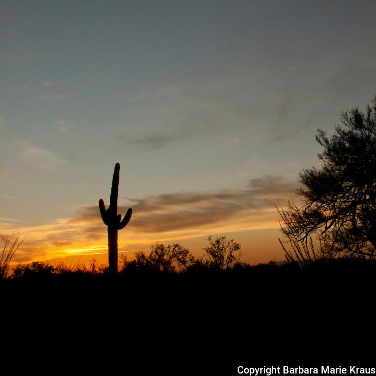 Saguaro National Park, Tucson. Silhouette of Saguaro cactus at sunset