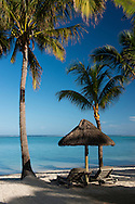 Palm trees on the beach on  Le Morne Brabant Peninsula on the south west coast of Mauritius, The Indian Ocean