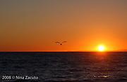 Bird in silhouette against a orange sky.