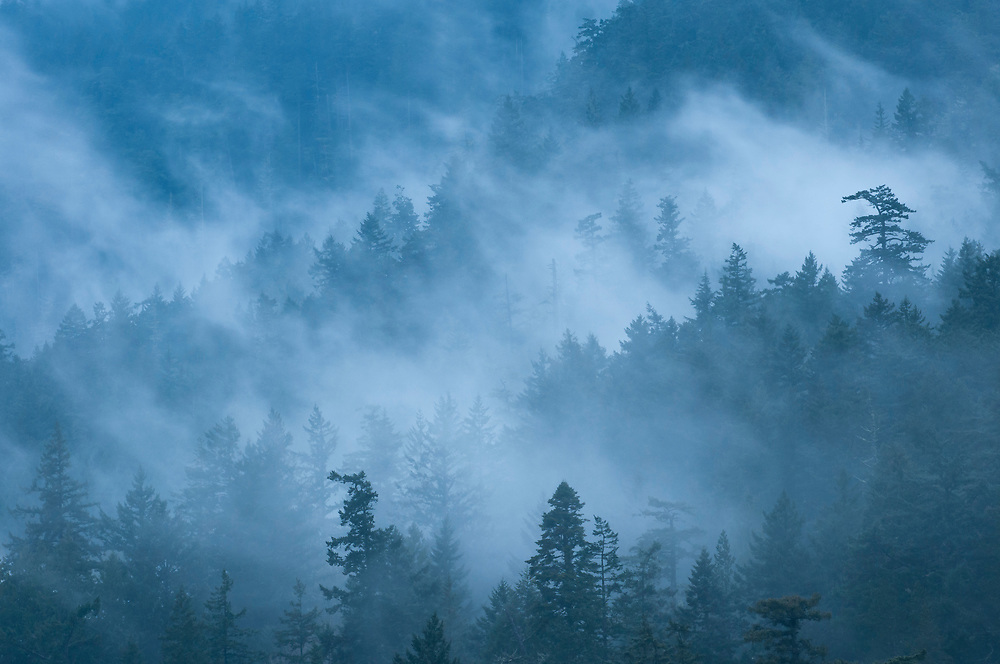 Fog and forest on the slopes of Mount Constitution, Moran State Park, Orcas Island, Washington.
