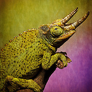 Exotic animal macro workshop photo