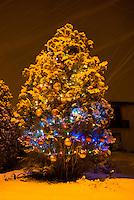 Christmas lights shining forth on a snow-covered Christmas Tree.