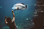 Enfant devant un aquarium de Nausica&auml;, Centre National de la Mer, Boulogne-sur-Mer, Nord-Pas-de-Calais, France.<br /> Child in front of an aquarium of Nausica&auml;, National Sea Centre, Boulogne-sur-Mer, Nord-Pas-de-Calais region.