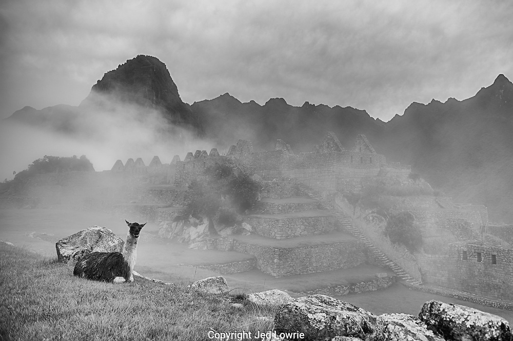 Although the llama was not found living in the ruins by Hiram Bingham they add a pleasant ambiance. They are also a very bio friendly mowing solution. The mist that shrouds the ruins give this image an otherworldly feel.