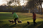 Dog owners exercise their pets during an autumn afternoon in south London's Ruskin Park, Lambeth SE24.