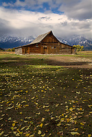 The T.A. Moulton Barn is considered one of the most photographed barns in America.  It lies just off Antelope Flats road in Grand Teton National Park with the Teton Mountain range providing a dramatic backdrop along with the fallen yellow aspen leaves in Autumn.