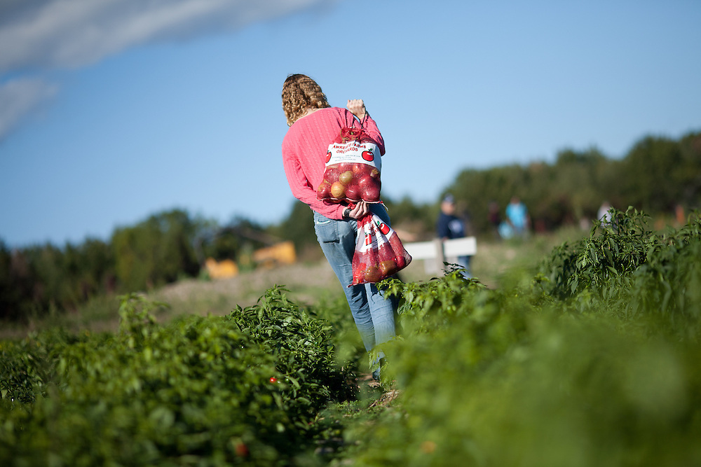 A woman carries bags of freshly picked apples through an orchard in upstate New York.