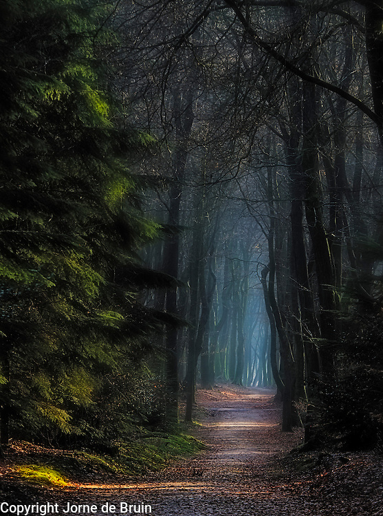 A path inside the forest dissappears into the mist.