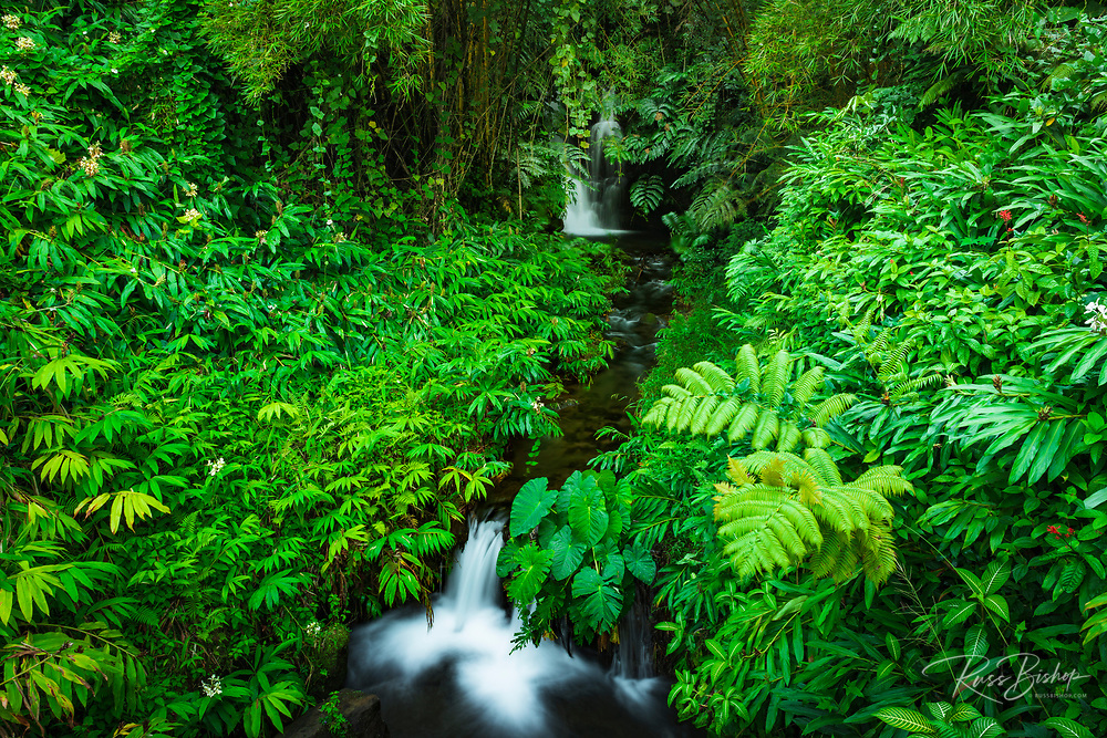 Jungle stream, Akaka Falls State Park, The Big Island, Hawaii USA