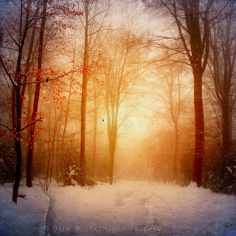misty winter morning in a snow covered forest. the low rising sun created a dreamy atmosphere.<br />