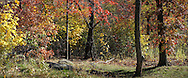 Autumn colors on The Great Hill in Central Park