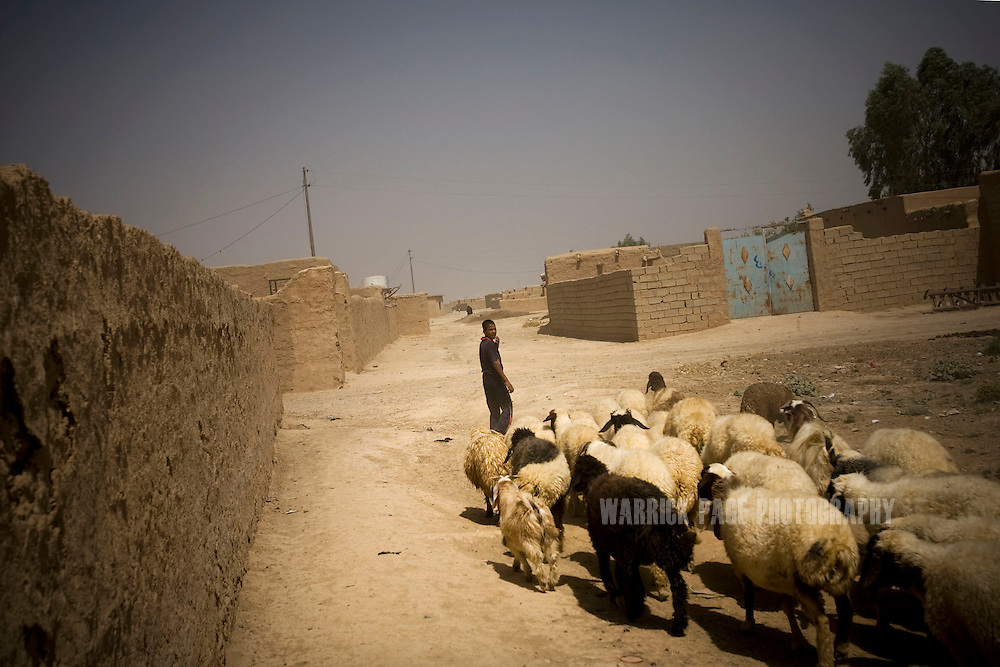 ALI AYUN, IRAQ - JUNE 11: An Iraq boy herds his sheep through a village, on June 11, 2010, in Ali Ayun, Diyala Province, Iraq. Iraq faces multiple challenges in the lead-up to the drawn-down of US forces in Iraq, with many observers claiming that while they have the capablities of handling home-grown problems, they are far from being able to tackle external threats. Political wrangling has reportedly fostered greater instability throughout the country with fears of renewed sectarian violence breaking out as insurgents set-up attacks in an attempt to exploit vulnerabilities amongst the populace. (Photo by Warrick Page)