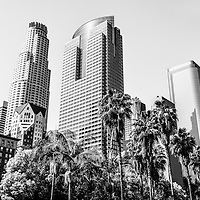 Downtown Los Angeles buildings black and white picture. Includes U.S. Bank Tower building, Gas Company Tower, and Two California Plaza an Southern California palm trees. Photo is high resolution an was taken in 2012.