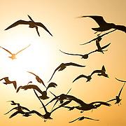 Flight Of Sunset on a beach in Dubai