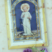 Vintage print of angelic child with halo lying on antique paper with dried mauve Pelargonium flowers