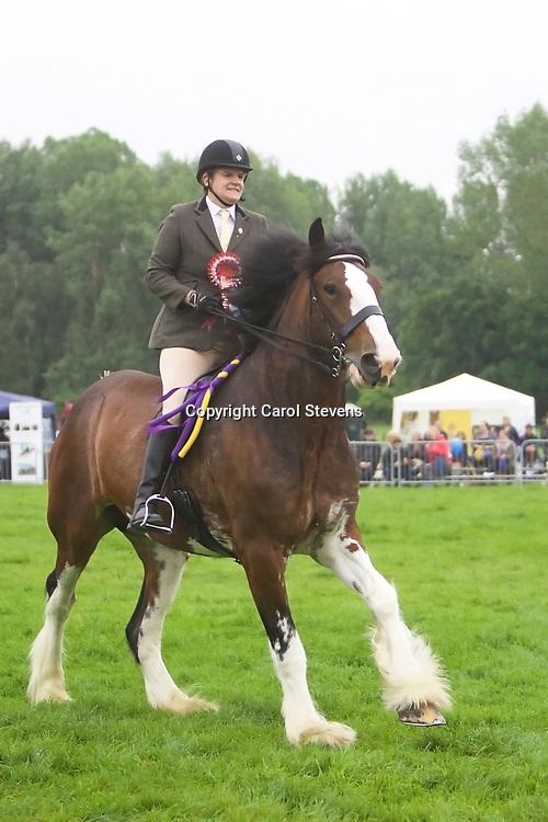 Karen Whittaker riding KINGS FLOWER OF SCOTLAND<br /> Winner  Ridden Heavy Horse Class