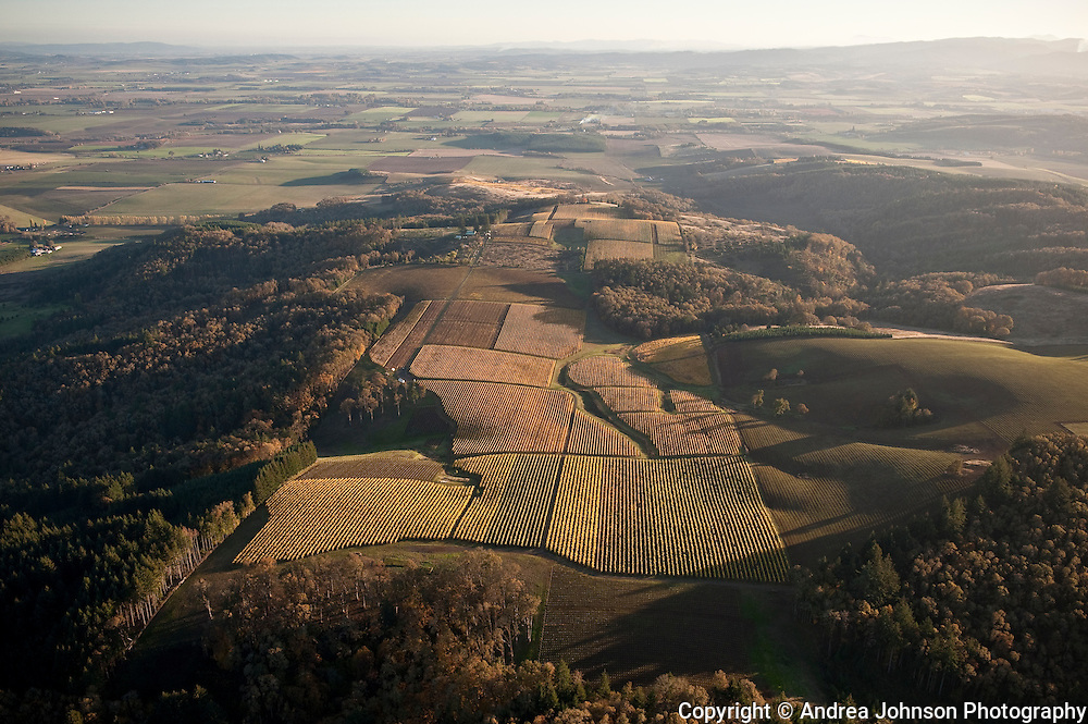 Aerial view over Hyland Vineyards, McMinnville AVA< Willamette Valley, Yamhill-Carlton, Oregon