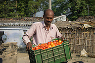 Jeevika Field Associate Jagganath Prasad arrives from the local markets with a top up of vegetables that is needed by the collection centre to be sold to their buyers in Muzaffarpur, Bihar, India on October 27th, 2016. Non-profit organisation Technoserve works with women vegetable farmers in Muzaffarpur, providing technical support in forward linkage, streamlining their business models and linking them directly to an international market through Electronic Trading Platforms. Photograph by Suzanne Lee for Technoserve