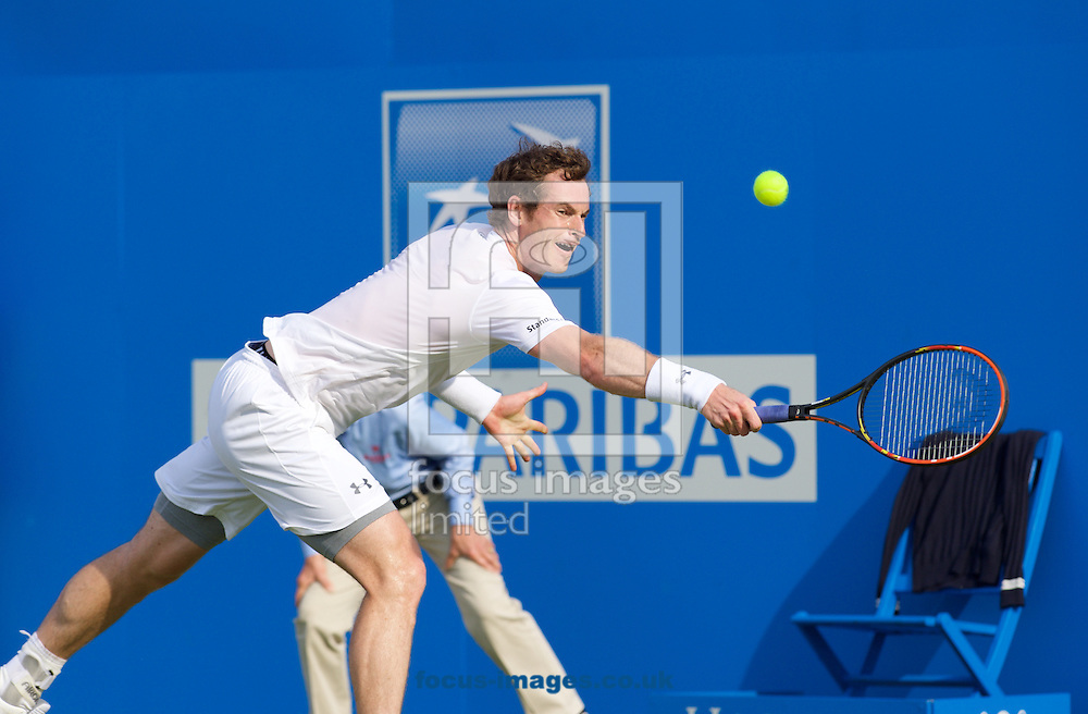 Andy Murray (GBR) during his first round match against Yen-Hsun Lu (TPE) during Aegon Championships at the Queen's Club, West Kensington<br /> Picture by Alan Stanford/Focus Images Ltd +44 7915 056117<br /> 16/06/2015
