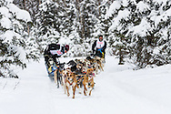 Musher Egil Ellis passes musher Kevin Cook competing in the Fur Rendezvous World Sled Dog Championships at Campbell Airstrip in Anchorage in Southcentral Alaska. Winter. Afternoon.