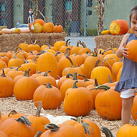 Naomi Mohn, 3, picks up a pumpkin at Shawn's Pumpkin Patch on Thursday, October 14, 2010. Shawn's Pumpkin Patch is located on the corner of 23rd and Wilshire Blvd. and features a  petting zoo, bouncer, ball house, face painting and a play area.