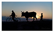 A boy and his bull in Tananarivo, Madagascar. Nikon D5, 70-200mm @ 70mm, f4.5, EV-1, 1/8000sec, ISO10000, Aperture priority.