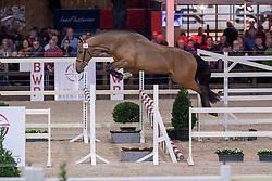 028, Rocco E<br /> BWP Hengstenkeuring -  Lier 2020<br /> © Hippo Foto - Dirk Caremans<br />  17/01/2020