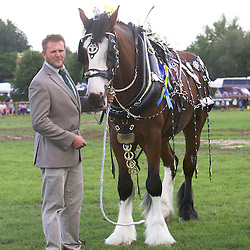 Bakewell Show 2016  Harness and Decorated