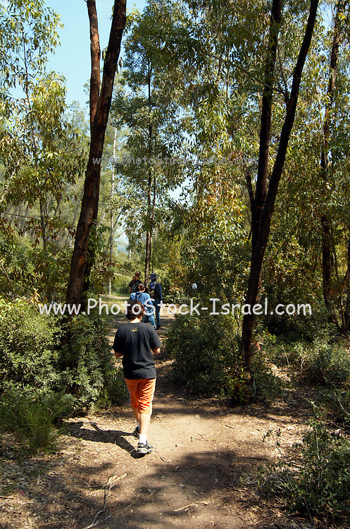 A group hiking through the woods on the Judea hills, Israel