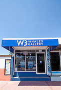W3 Whales Gallery, features a jewelry collection and Talavera pottery, designed and manufactured in Mexico, and  is dedicated to nature  lovers, tourists, scientists, environmentalists, marine  wildlife and sea researchers.  It  is the result  of  creative ideas  and selected  quality materials, combined with art to create unique collectable pieces for all ages and nationalities,replicating with detail marine animals features.<br />