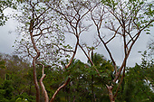Lomas de Sayulita