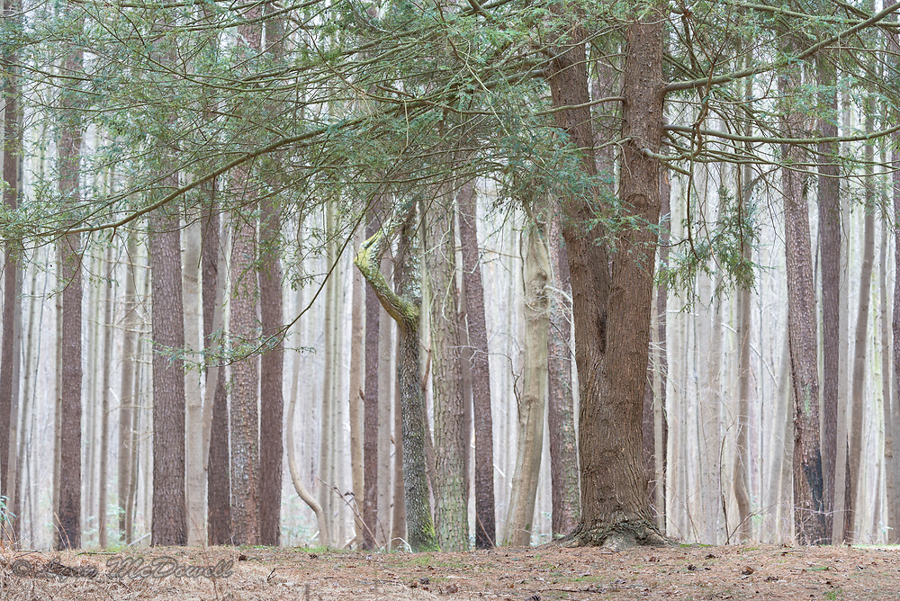 Patterns and colors of trees living in Blackbird State Forest, Delaware
