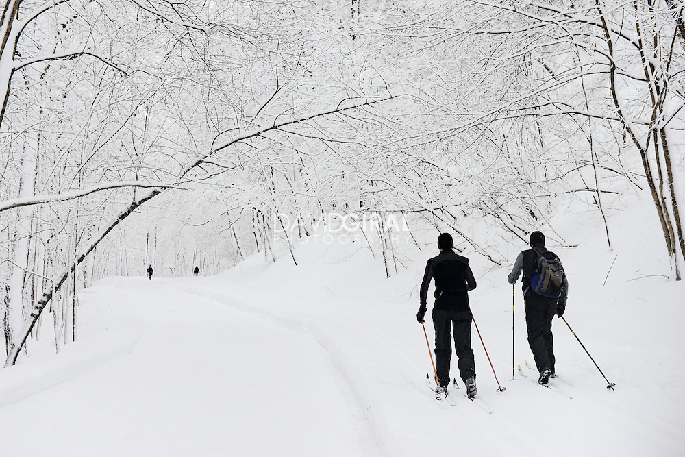 men cross-country skying in Snow covered Mont Royal Park in Winter, Parc du Mont Royal, Montreal, Quebec, Canada
