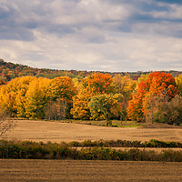 Brilliant autumn color on the rolling Trent Hills in Northumberland County, Ontario.