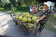 A cartload of fresh jackfruit.