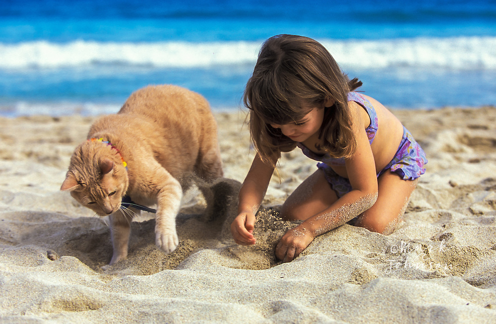3 year old girl & cat digging in sand together on beach