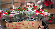 A Cottonwood High School baseball player unloads a crate of poinsettias at the George E. Wahlen Department of Veterans Affairs Medical Center, Wednesday, Dec. 5, 2012.