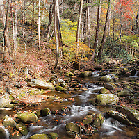 Small stream and beautiful fall colors, Roaring Fork, Great Smoky Mountain National Park.