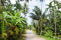 Unpaved road along trees; Koh Pha Ngan; Thailand
