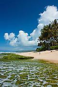 Children play on a north shore beach, Oahu, Hawaii