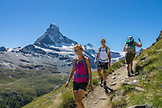 The Matterhorn (4478 m/14,692ft) rises above Zmutt Valley. From Zermatt, hike the scenic Höhbalmen Höhenweg loop via Bergrestaurant Edelweiss, Trift Hut and Zmutt, in the Pennine Alps, Switzerland, Europe. With delightful views of alpine meadows, peaks and glaciers, this strenuous walk went up and down 1200 meters over 21.6 km (13.4 miles). For licensing options, please inquire.