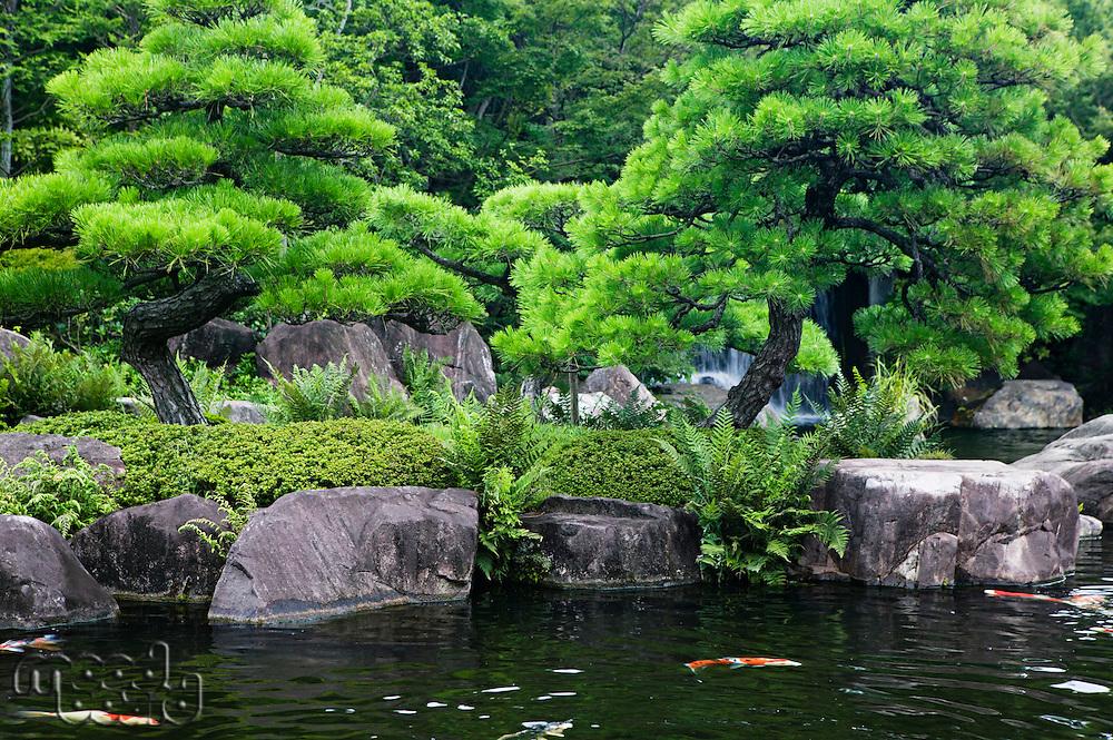 Japan Himeji Himeji Koko-en Gardens pond with Koi Carps