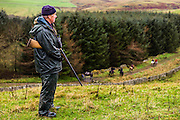 Jedburgh, Scottish Borders, UK. 3rd December 2015. A gun of the Jedforest Hunt waits on point for a fox to break covert.