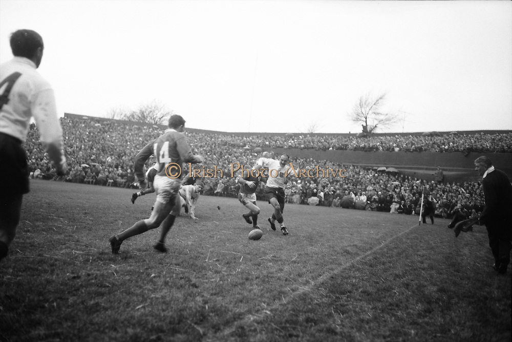 Crauste evades Irish forward in pursuit of ball on ground, Irish back, Casey, 14, on left,..Irish Rugby Football Union, Ireland v France, Five Nations, Landsdowne Road, Dublin, Ireland, Saturday 23rd January, 1965,.23.1.1965, 1.23.1965,..Referee- D G Walters, Welsh Rugby Union, ..Score- Ireland 3 - 3 France, ..Irish Team, ..T J Kiernan,  Wearing number 15 Irish jersey, Full Back, Cork Constitution Rugby Football Club, Cork, Ireland,..P J Casey, Wearing number 14 Irish jersey, Right Wing, Landsdowne Rugby Football Club, Dublin, Ireland, ..J C Walsh,  Wearing number 13 Irish jersey, Right Centre, University college Cork Rugby Football Club, Cork, Ireland,..M K Flynn, Wearing number 12 Irish jersey, Left Centre, Wanderers Rugby Football Club, Dublin, Ireland, ..K J Houston, Wearing number 11 Irish jersey, Left Wing, Bruff Rugby Football Club, Limerick, Ireland, and, Oxford University Rugby Footabll Club, Oxford, England, ..C M H Gibson, Wearing number 10 Irish jersey, Stand Off, Cambridge University Rugby Football Club, Cambridge, England, and, N.I.F.C, Rugby Football Club, Belfast, Northern Ireland, ..R M Young, Wearing number 9 Irish jersey, Scrum Half, Queens University Rugby Football Club, Belfast, Northern Ireland,..S MacHale, Wearing number 1 Irish jersey, Forward, Landsdowne Rugby Football Club, Dublin, Ireland, ..K W Kennedy, Wearing number 2 Irish jersey, Forward, Queens University Rugby Football Club, Belfast, Northern Ireland,..R J McLoughlin, Wearing number 3 Irish jersey, Captain of the Irish team, Forward, Gosforth Rugby Football Club, Newcastle, England, ..W J McBride, Wearing number 4 Irish jersey, Forward, Ballymena Rugby Football Club, Antrim, Northern Ireland,..W A Mulcahy, Wearing number 5 Irish jersey, Forward, Bective Rangers Rugby Football Club, Dublin, Ireland, ..M G Doyle, Wearing number 6 Irish jersey, Forward, University College Dublin Rugby Football Club, Dublin, Ireland,..R A Lamont, Wearing number 8 Irish jersey, Forward, Instonians Rugby
