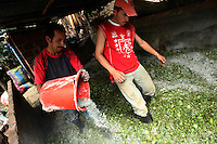 Workers mix in cement with cut coca leaf in a preliminary stage of the coca lab process in a remote area of the southern Colombian state of Nariño, on Monday, June 25, 2007. Although government efforts to eradicate coca have reached many parts of Colombia, still the coca business thrives. (Photo/Scott Dalton)